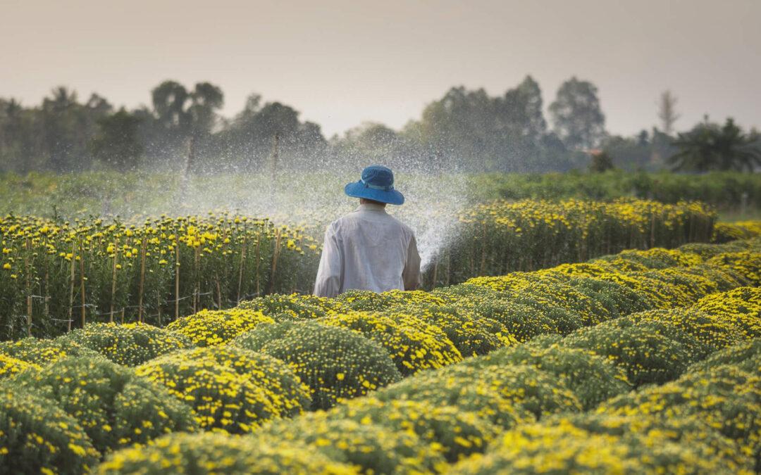 Una nueva investigación vincula el popular herbicida Roundup con el cáncer